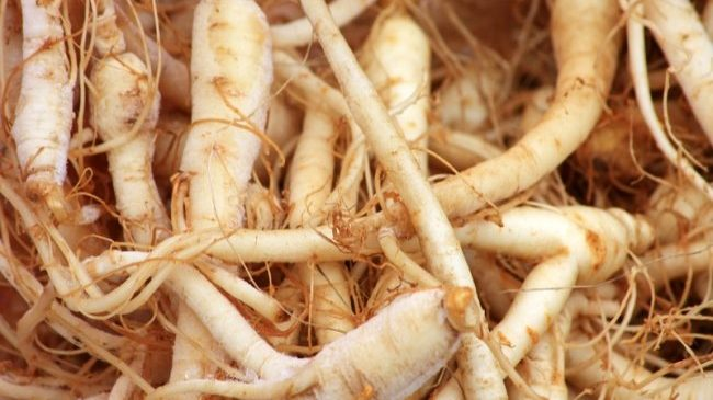 Use of ginseng in the treatment of diabetes