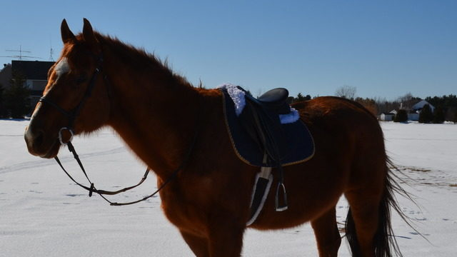 Thoughtful Gifts for Horse Owners