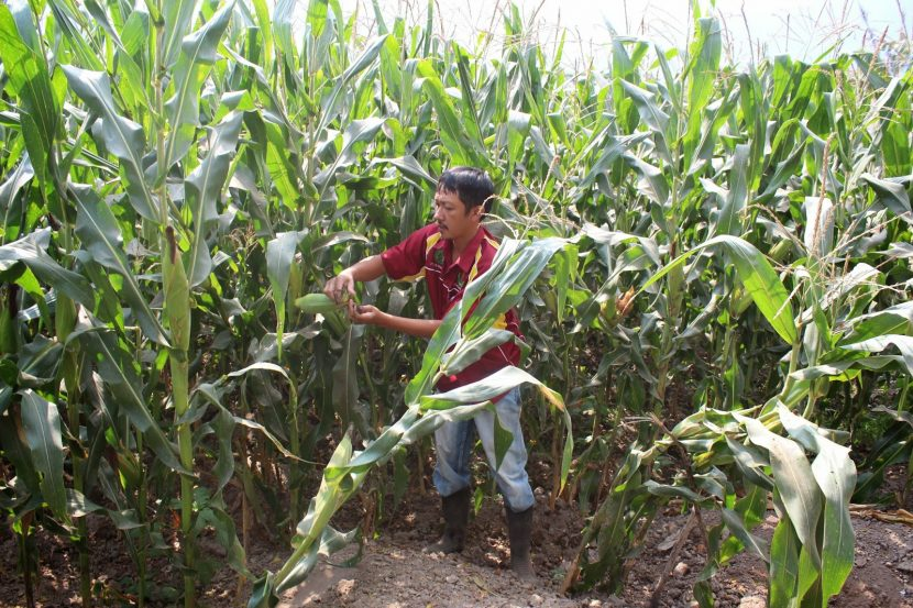 Ridding the agriculture industry of its stereotypes
