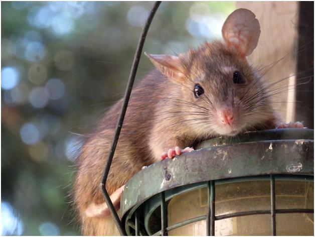 Pest Control's A Tough Game, But It's Winnable