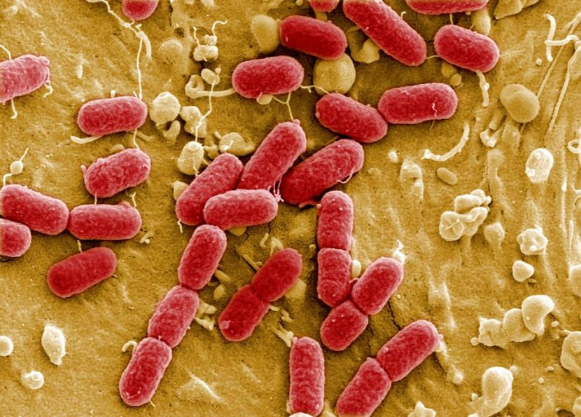 Infectious Disease On Rise Among Children Due To Rise In Antibiotics