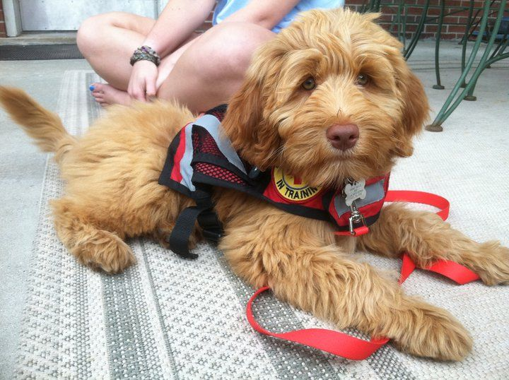 OMG! Service Dogs Can Smell Infection, Know Diabetes In Owners
