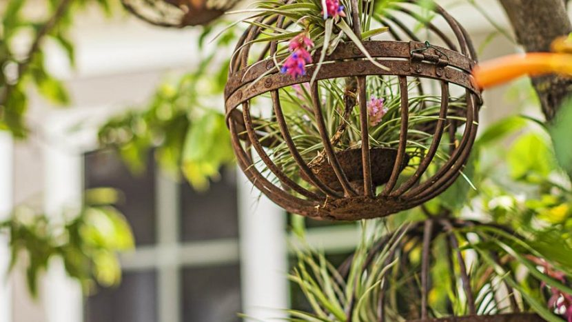 Tips On Which Houseplant Suits Your Lifestyle