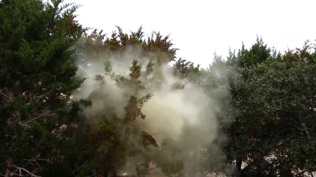 Mountain Cedar Allergies