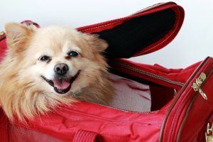 Essential items for your pets