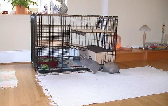 How To Make Rabbit Cage, Custom Cage For Bunnies