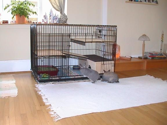How To Make Rabbit Cage Custom Cage For Your Bunnies