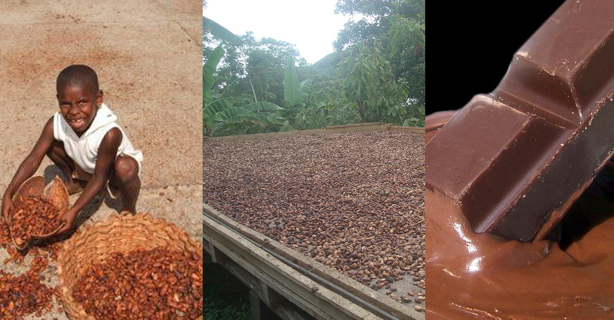 chocolate industry The chocolate industry in the philippines evidences the agricultural roots of the philippine society the growing of cacao or cocoa boasts a long history stretching from the colonial times.