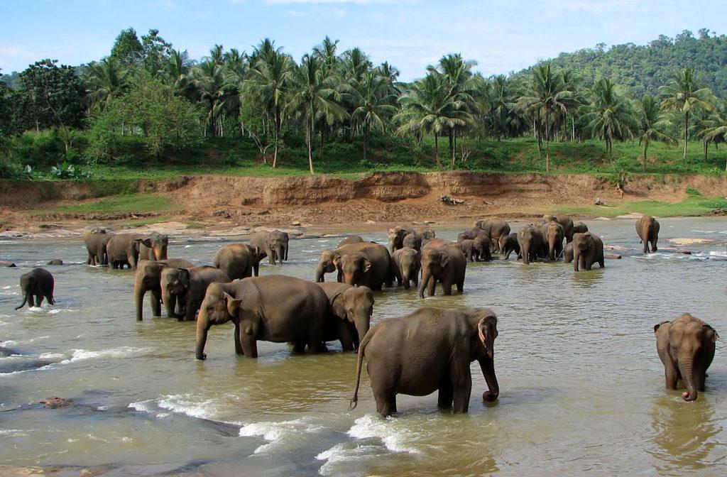 Elephant Rehabilitation