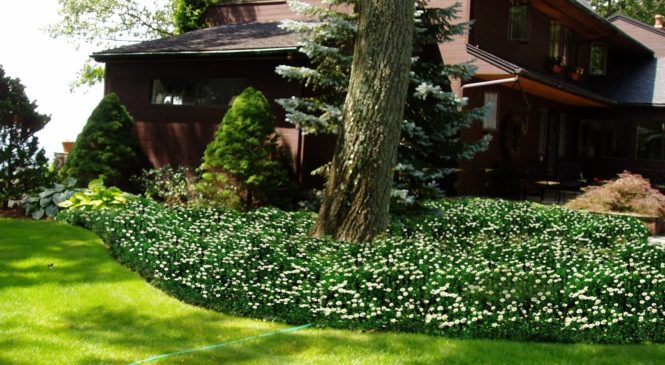 Tips to Choose Mulch for Garden Ground Cover