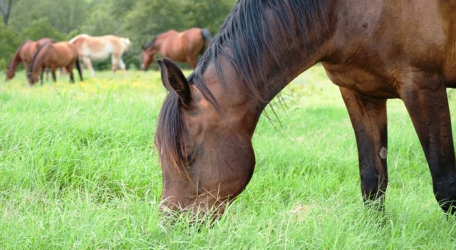 Basic Nutrition Needs for Horses