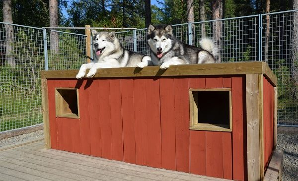 How To Get Good Dog House