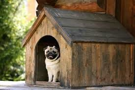 Make sure the dog house is non-toxic