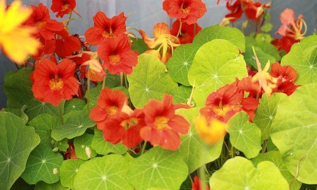 Ornamental Shrubs- flower blooms
