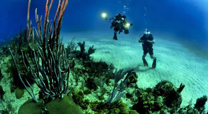 Get Spoilt for Choice with Exciting Scuba Diving Packages