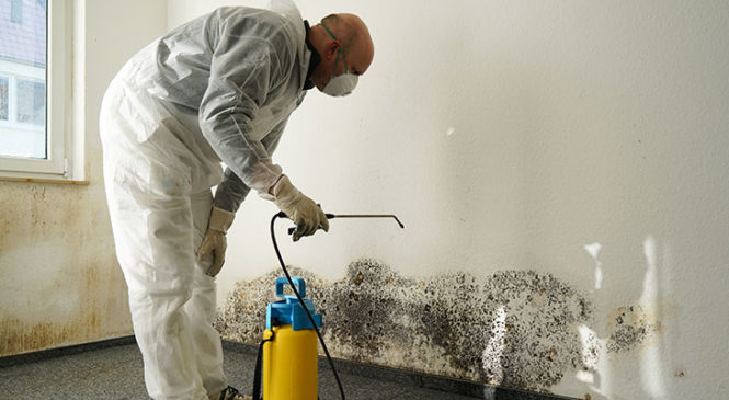 How to clean mold, mildew at home