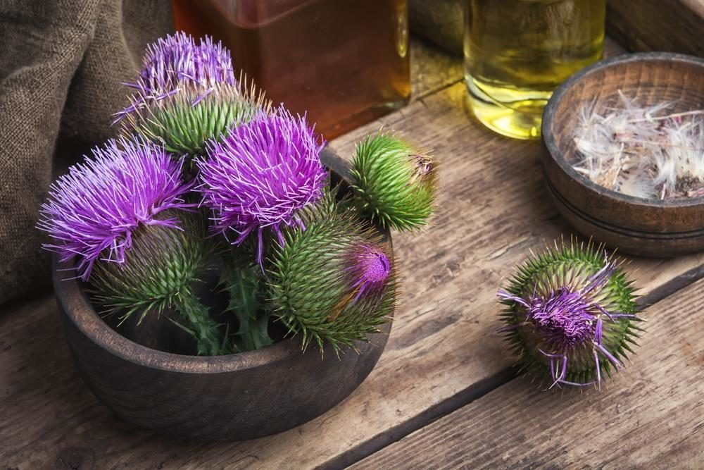 Milk Thistle Folk Medicine : Stay Healthy with Traditional Herbalism