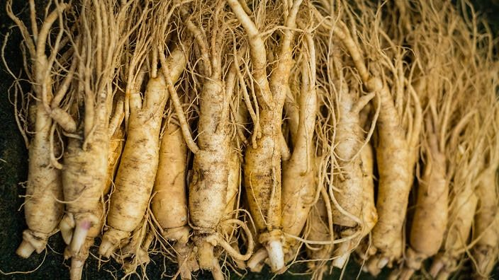ginseng and garlic Folk Medicine : Stay Healthy with Traditional Herbalism