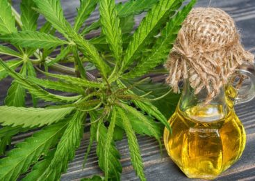 Your In-Depth Guide to CBG Oil – and Why It is Making a Mark in a Big Way