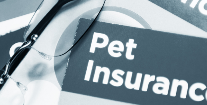 Pet Insurance Policy provider How To Choose A Pet Insurance Policy