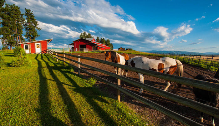 livestock How You Can Easily Select the Proper Fencing for Your Farm or Agricultural Land