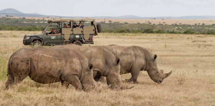Rare animals you'll be privileged to see on safari