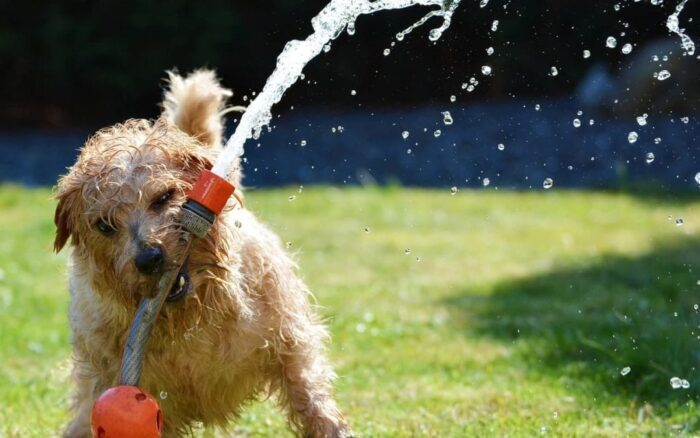 How to Keep Your Dog Safe This Summer