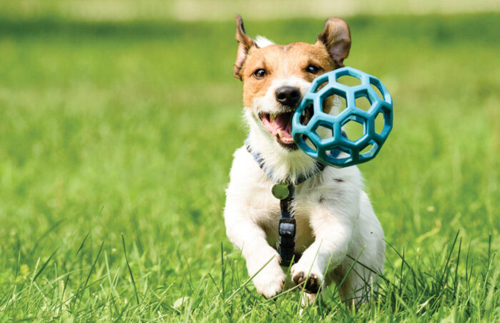 Teach Your Pets to Exercise 10 Essential Tips to Make your Puppy Get Used to its New GPS