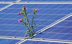 The Push for Renewable Energy: The Advantages of Solar Panels
