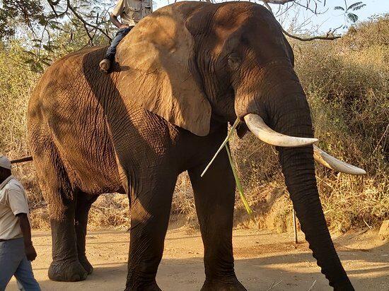 Elephant Whispers