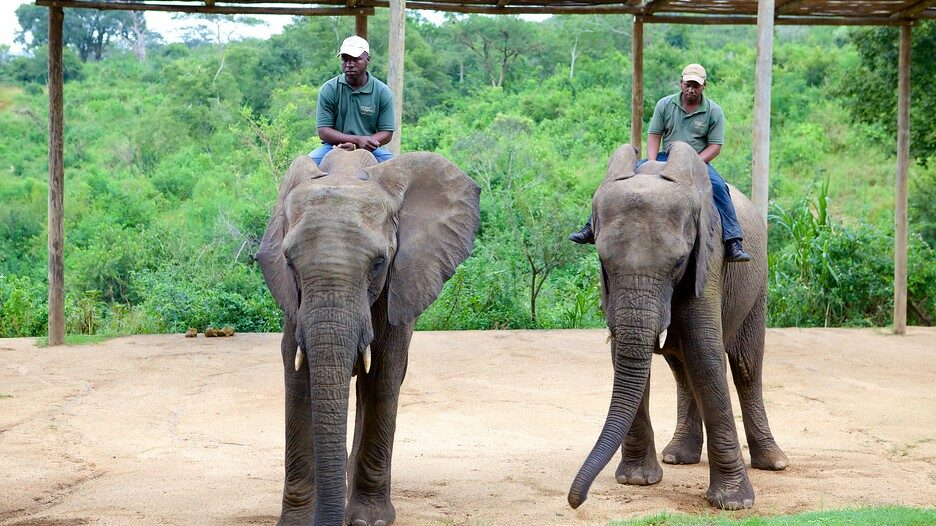 Elephant Whispers in South Africa