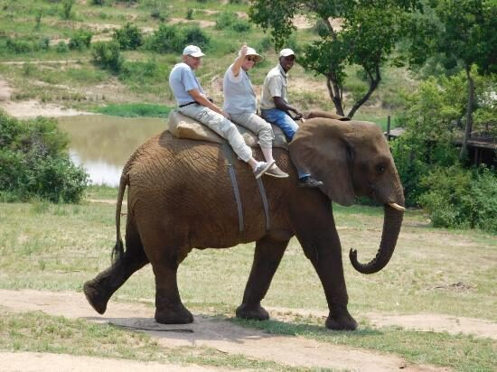 Elephant ride at Elephant Whispers in South Africa