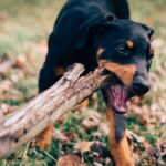 Bitten by a Dog? You May Be Able to Sue