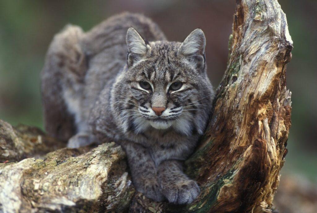wildlife in Spain